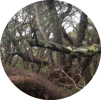 NRMjobs - NRM Jobs - Tree, Forest & Arborist