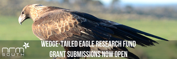 NRMjobs Notice 20005693 - Tasmanian wedge-tailed eagle Research Fund - 2020 grants round