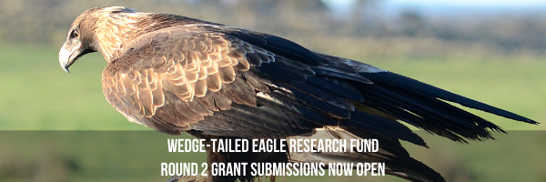 NRMjobs Notice 20007997 - Tasmanian Wedge-tailed Eagle Research Fund